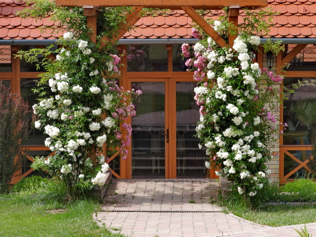 KultPince kertje Medárd napján