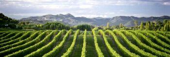 Új-zélandi borvacsora a KultPincében